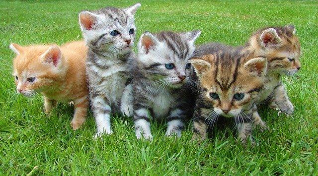 barevná koťátka