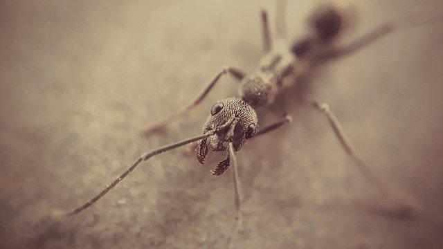 mravenec z blízka