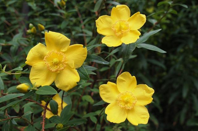 květy léčivých rostlin
